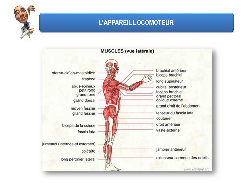 LAPPAREIL LOCOMOTEUR