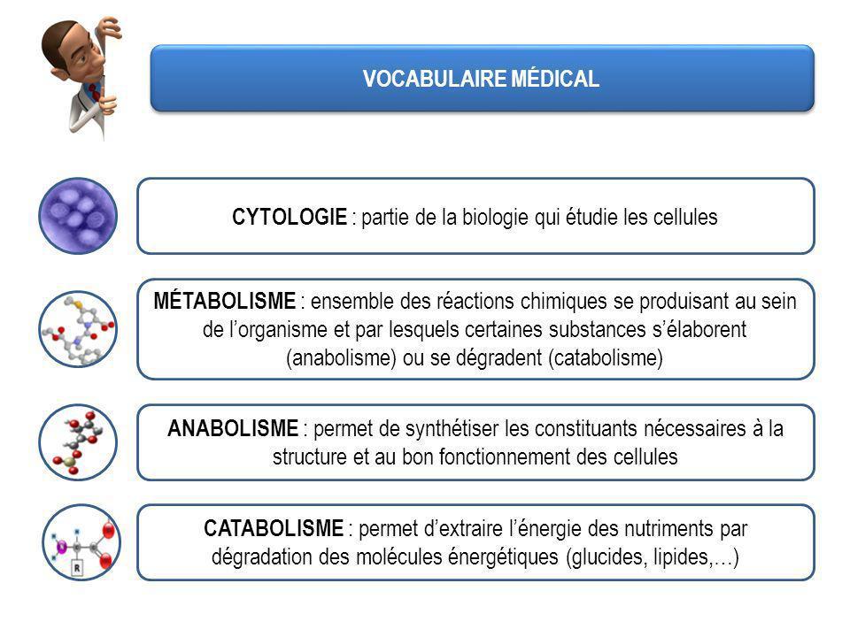 VOCABULAIRE MÉDICAL CYTOLOGIE : partie de la biologie qui étudie les cellules MÉTABOLISME : ensemble des réactions chimiques se produisant au sein de