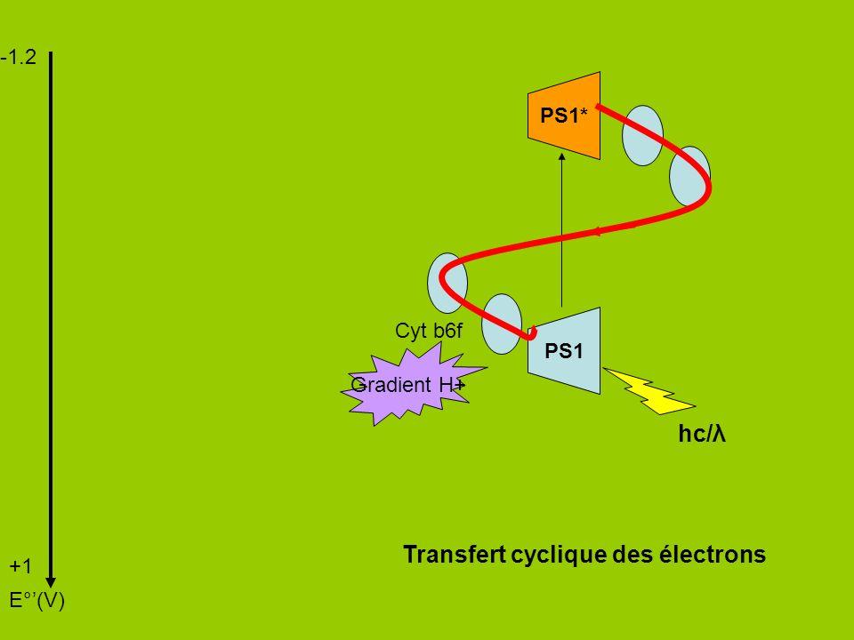 -1.2 +1 E°(V) PS1 PS1* hc/λ Cyt b6f Gradient H+ Transfert cyclique des électrons
