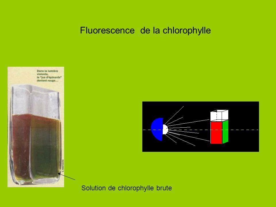 Fluorescence de la chlorophylle Solution de chlorophylle brute
