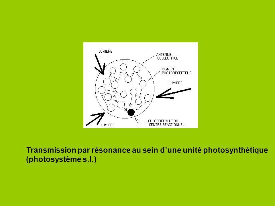 http://aob.oxfordjournals.org/ Technique dimmunomarquage dans des feuilles de Sorgho A: immunomarquage de la Rubisco B: immunomarquage de la PEPC