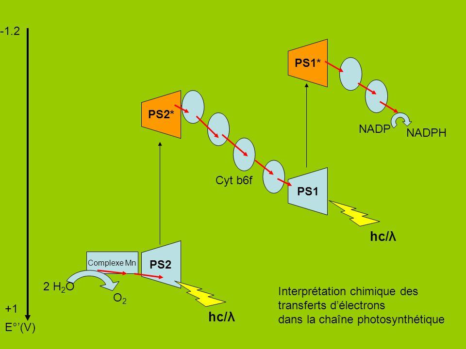 -1.2 +1 E°(V) PS1 PS2 PS1* NADP NADPH hc/λ PS2* Cyt b6f Complexe Mn 2 H 2 O O2O2 Interprétation chimique des transferts délectrons dans la chaîne photosynthétique Gradient H+