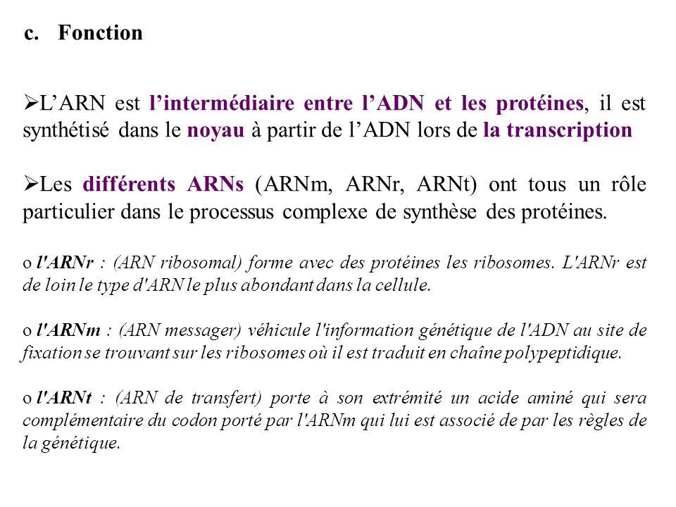c.Fonction LARN est lintermédiaire entre lADN et les protéines, il est synthétisé dans le noyau à partir de lADN lors de la transcription Les différen