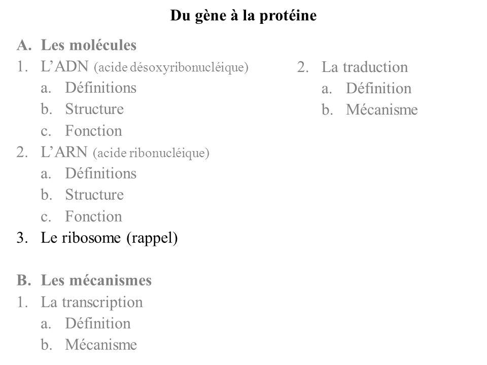 Du gène à la protéine A.Les molécules 1.LADN (acide désoxyribonucléique) a.Définitions b.Structure c.Fonction 2.LARN (acide ribonucléique) a.Définitio