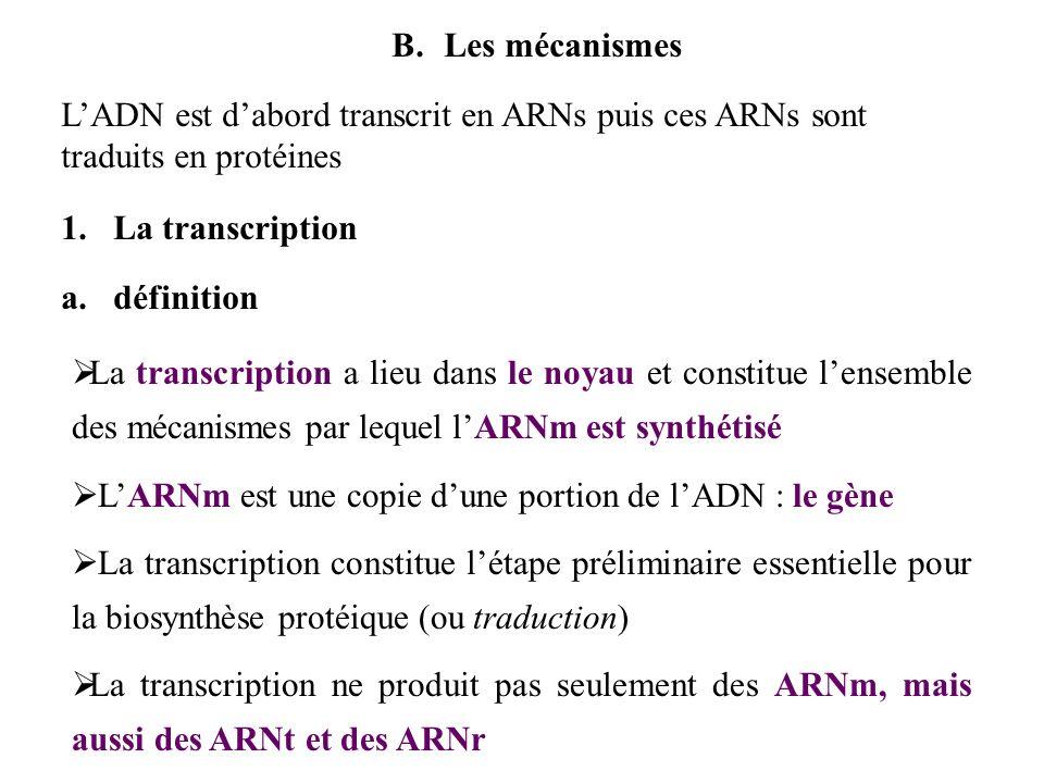 B.Les mécanismes LADN est dabord transcrit en ARNs puis ces ARNs sont traduits en protéines 1.La transcription a.définition La transcription a lieu da