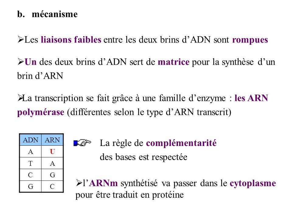 b.mécanisme Les liaisons faibles entre les deux brins dADN sont rompues Un des deux brins dADN sert de matrice pour la synthèse dun brin dARN La trans