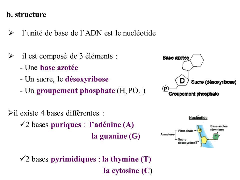Structure des bases de lADN Les nucléotides peuvent se lier les uns aux autres par l intermédiaire de leur groupe phosphate et de leur sucre.
