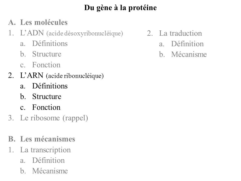 B.Les mécanismes LADN est dabord transcrit en ARNs puis ces ARNs sont traduits en protéines 1.La transcription a.définition La transcription a lieu dans le noyau et constitue lensemble des mécanismes par lequel lARNm est synthétisé LARNm est une copie dune portion de lADN : le gène La transcription constitue létape préliminaire essentielle pour la biosynthèse protéique (ou traduction) La transcription ne produit pas seulement des ARNm, mais aussi des ARNt et des ARNr