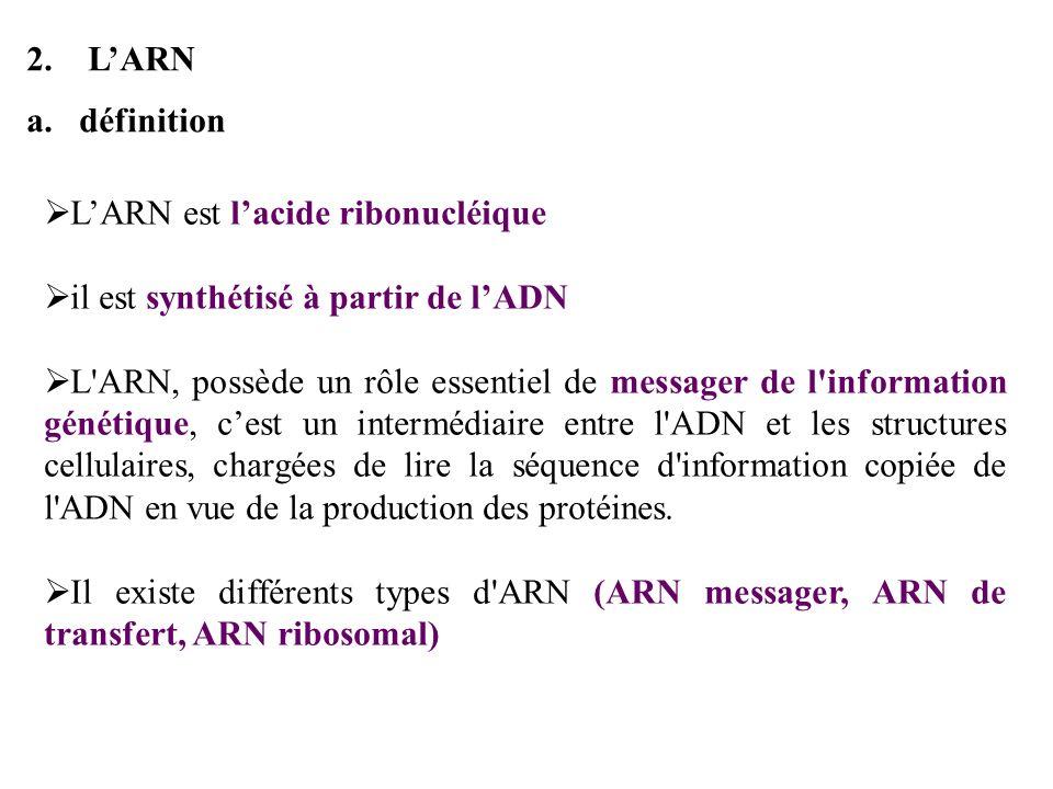 b.La structure lunité de base est comme pour lADN le nucléotide Les différences avec lADN : Le sucre est le ribose (désoxyribose pour lADN) La base Thymine (T) nexiste pas et est remplacée par la base Uracile (U) LARN est une molécule simple brin