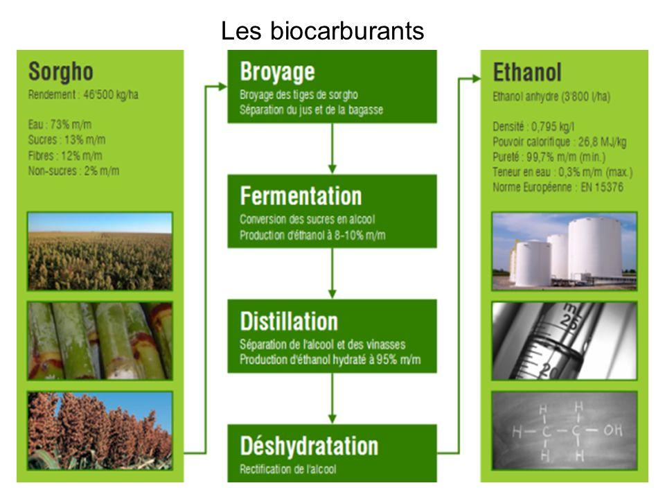 Les biocarburants Le bio-éthanol est obtenu par fermentation de sucres par des levures.