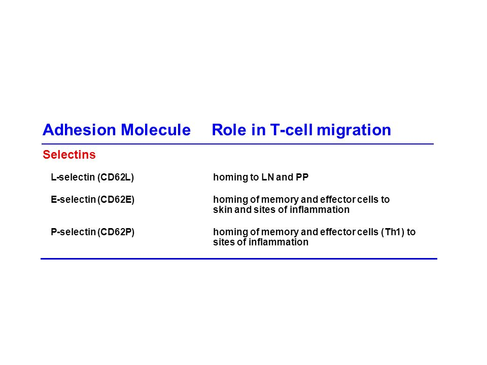 Selectins L-selectin (CD62L)homing toLN andPP E-selectin (CD62E)homing of memory and effector cells to skin and sites of inflammation P-selectin (CD62