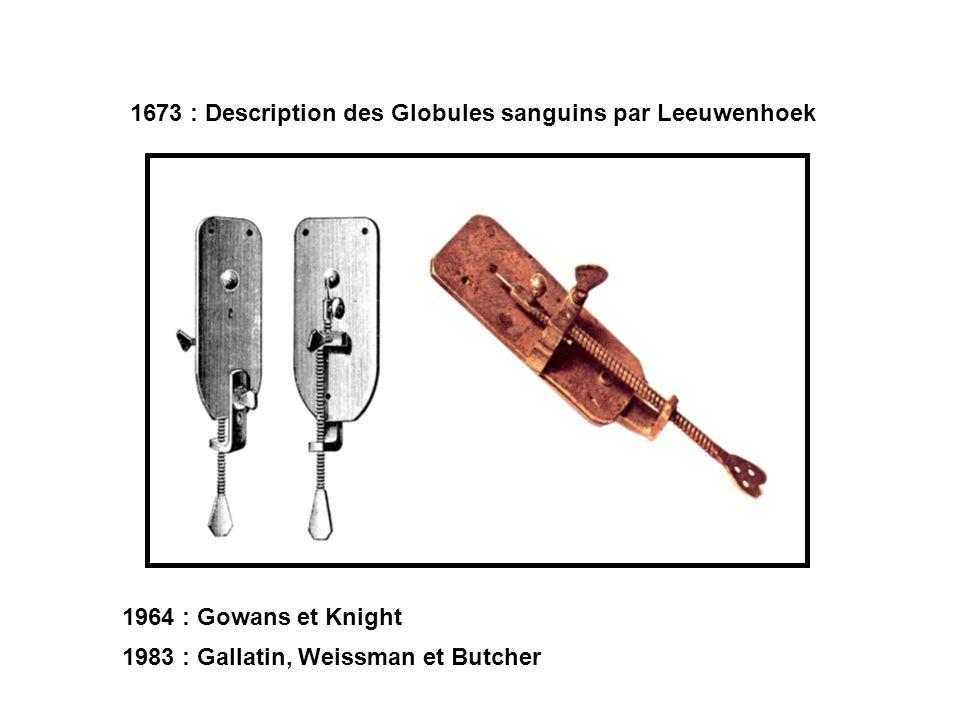 1964 : Gowans et Knight 1673 : Description des Globules sanguins par Leeuwenhoek 1983 : Gallatin, Weissman et Butcher