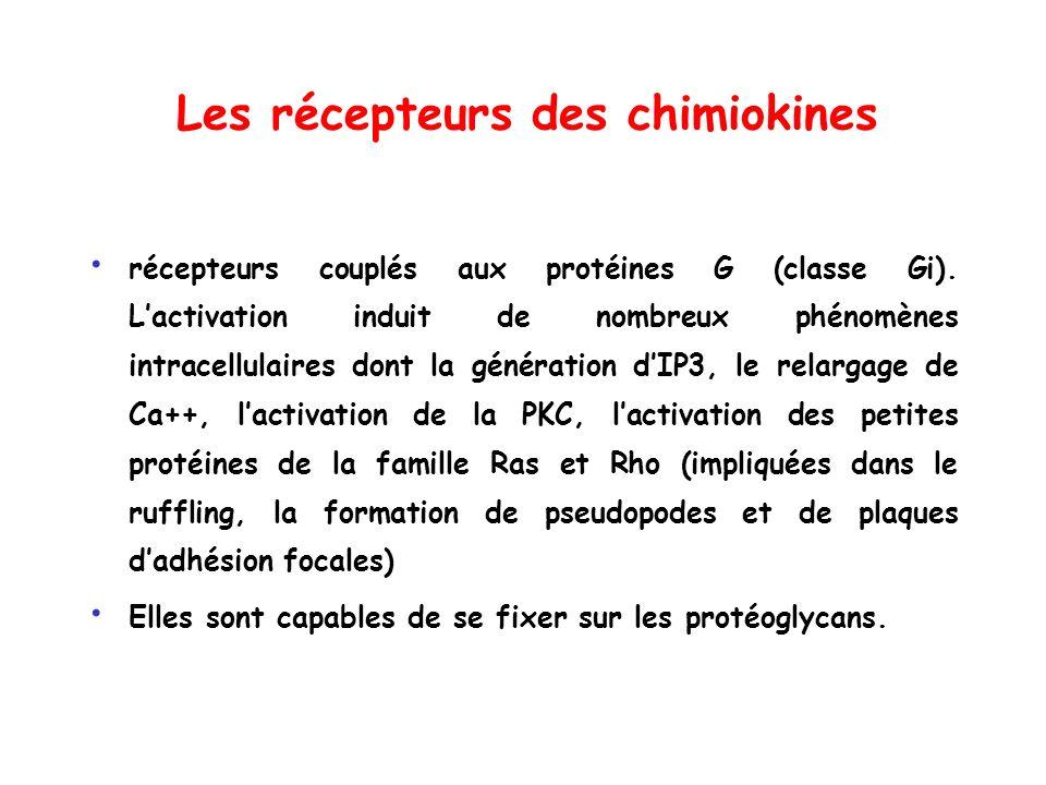 Les récepteurs des chimiokines récepteurs couplés aux protéines G (classe Gi). Lactivation induit de nombreux phénomènes intracellulaires dont la géné