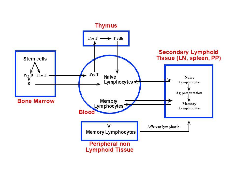 issue Blood Naive Lymphocytes Memory Lymphocytes Naive Lymphocytes Ag presentation Pre T Memory Lymphocytes Afferent lymphatic