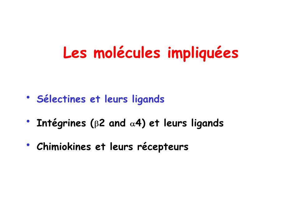 Les molécules impliquées Sélectines et leurs ligands Intégrines ( 2 and 4) et leurs ligands Chimiokines et leurs récepteurs
