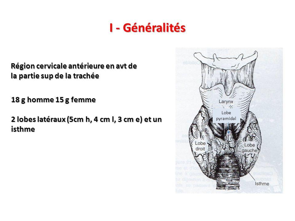 I - Généralités 18 g homme 15 g femme 2 lobes latéraux (5cm h, 4 cm l, 3 cm e) et un isthme Région cervicale antérieure en avt de la partie sup de la