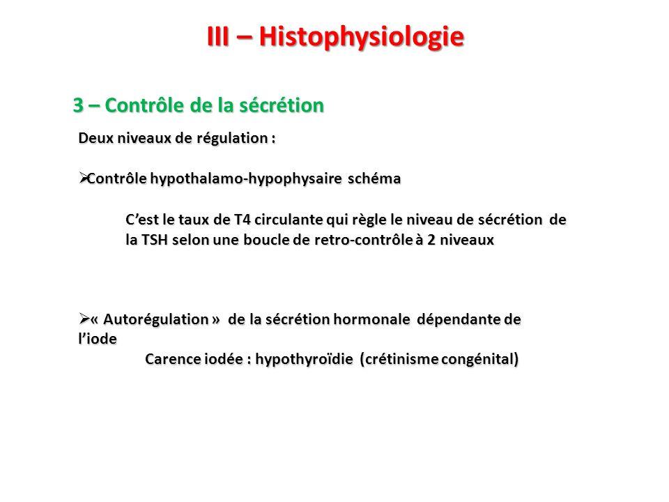 III – Histophysiologie 3 – Contrôle de la sécrétion Cest le taux de T4 circulante qui règle le niveau de sécrétion de la TSH selon une boucle de retro