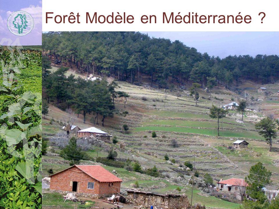 Forêt Modèle en Méditerranée ?