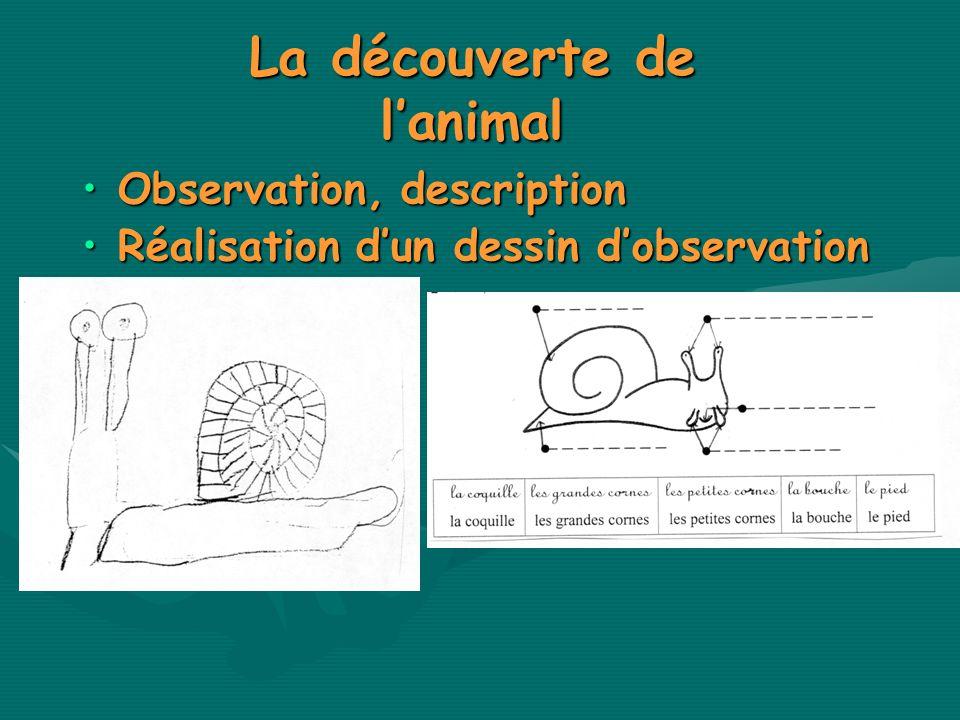 La découverte de lanimal Observation, descriptionObservation, description Réalisation dun dessin dobservationRéalisation dun dessin dobservation