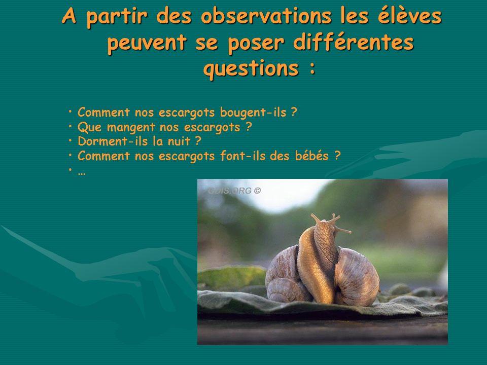 A partir des observations les élèves peuvent se poser différentes questions : Comment nos escargots bougent-ils ? Que mangent nos escargots ? Dorment-