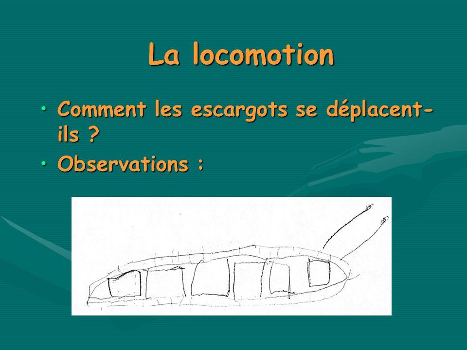 La locomotion Comment les escargots se déplacent- ils ?Comment les escargots se déplacent- ils ? Observations :Observations :