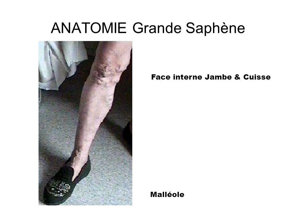 Anatomie Petite SAPHENE