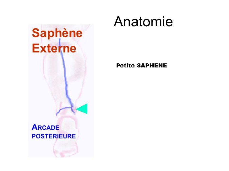 Anatomie = perforantes post.