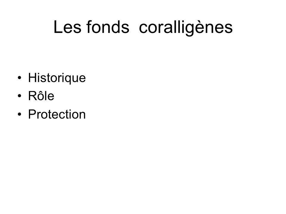 Les fonds coralligènes Historique Rôle Protection
