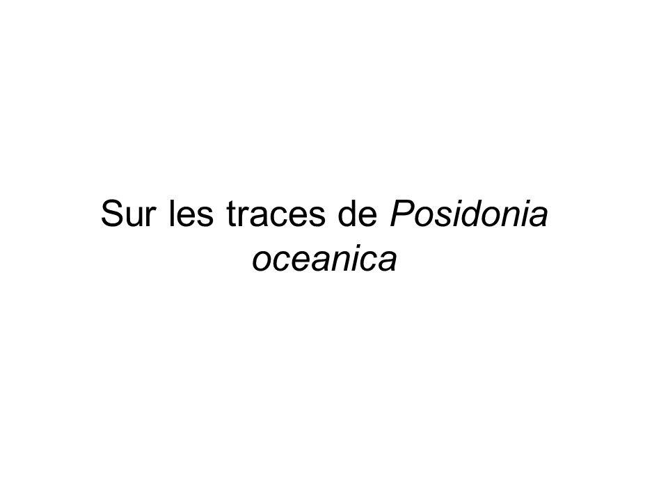 Sur les traces de Posidonia oceanica