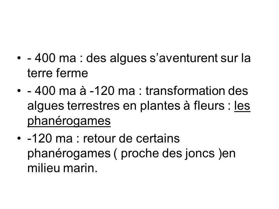 - 400 ma : des algues saventurent sur la terre ferme - 400 ma à -120 ma : transformation des algues terrestres en plantes à fleurs : les phanérogames
