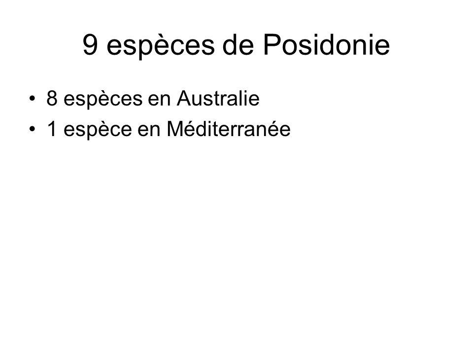 9 espèces de Posidonie 8 espèces en Australie 1 espèce en Méditerranée
