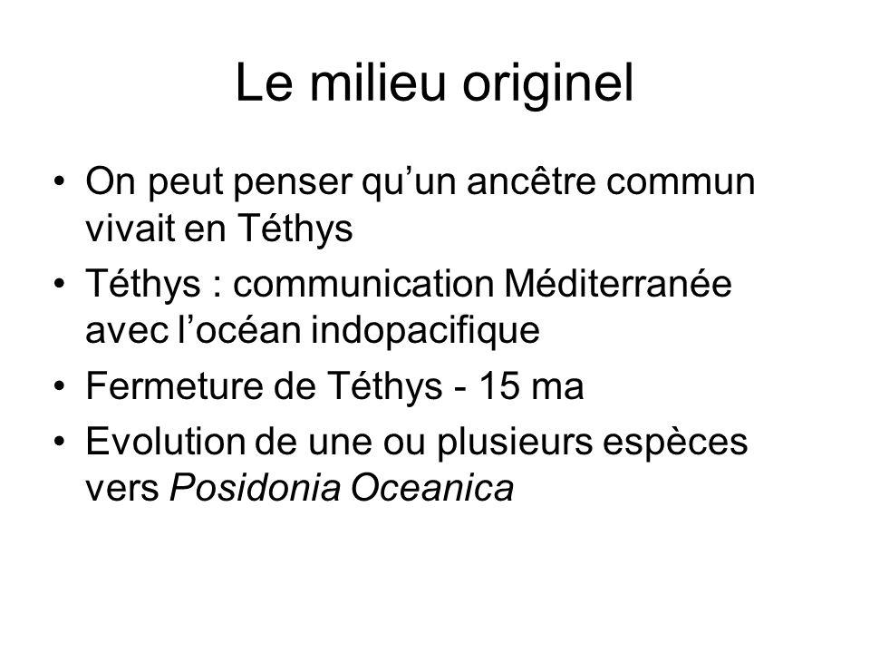 Le milieu originel On peut penser quun ancêtre commun vivait en Téthys Téthys : communication Méditerranée avec locéan indopacifique Fermeture de Téth