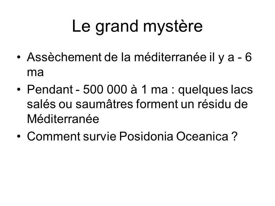 Le grand mystère Assèchement de la méditerranée il y a - 6 ma Pendant - 500 000 à 1 ma : quelques lacs salés ou saumâtres forment un résidu de Méditer