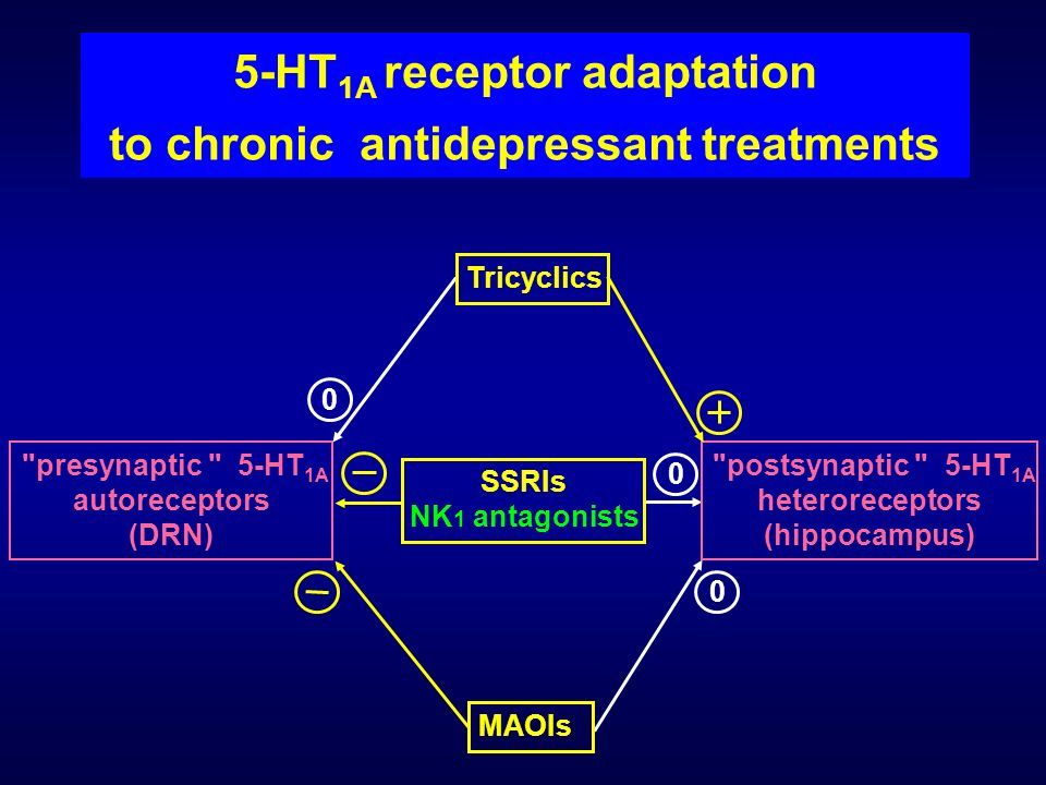 5-HT 1A receptor adaptation to chronic antidepressant treatments