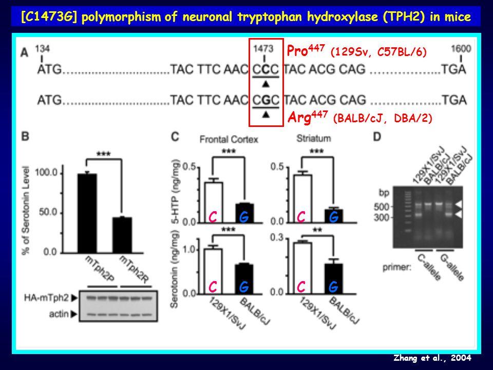 [C1473G] polymorphism of neuronal tryptophan hydroxylase (TPH2) in mice Zhang et al., 2004 C CC CG G G G Pro 447 (129Sv, C57BL/6) Arg 447 (BALB/cJ, DB