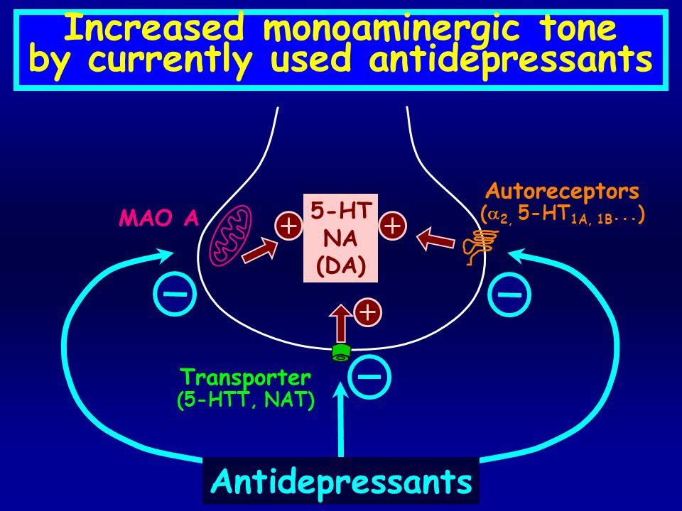 Increased monoaminergic tone by currently used antidepressants 5-HT NA (DA) Antidepressants Transporter (5-HTT, NAT) MAO A Autoreceptors ( 2, 5-HT 1A,
