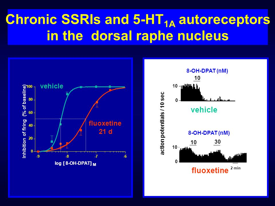 Chronic SSRIs and 5-HT 1A autoreceptors in the dorsal raphe nucleus -9-8-7-6 0 20 40 60 80 100 log [ 8-OH-DPAT] M vehicle fluoxetine 21 d Inhibition o