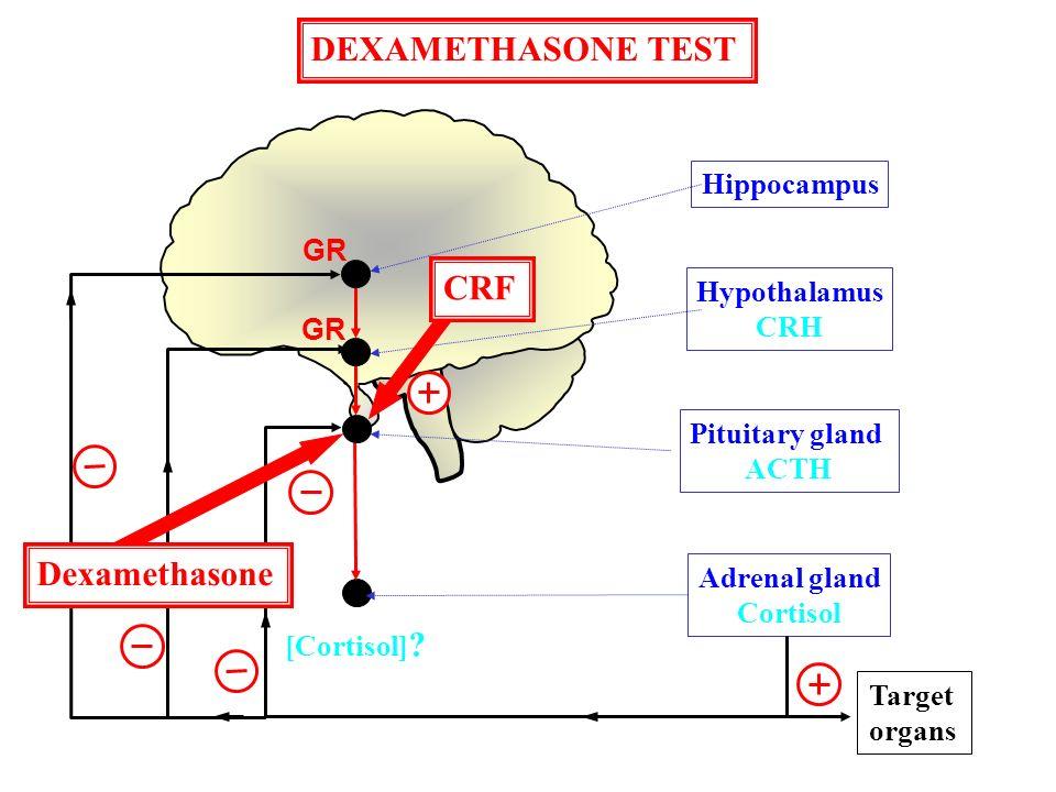 Hippocampus Hypothalamus CRH Pituitary gland ACTH Adrenal gland Cortisol Target organs GR [Cortisol] ? CRF Dexamethasone DEXAMETHASONE TEST