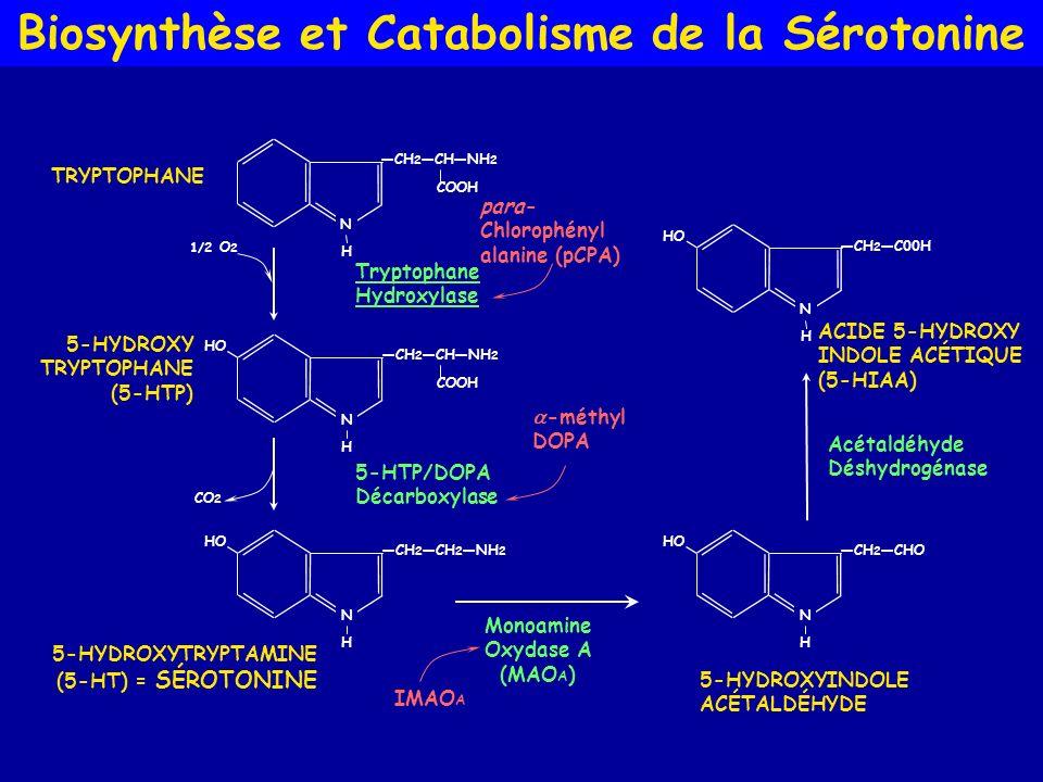 Biosynthèse et Catabolisme de la Sérotonine CO 2 N H CH 2 CH 2 NH 2 HO 5-HTP/DOPA Décarboxylase 5-HYDROXYTRYPTAMINE (5-HT) = SÉROTONINE N H CH 2 CHNH