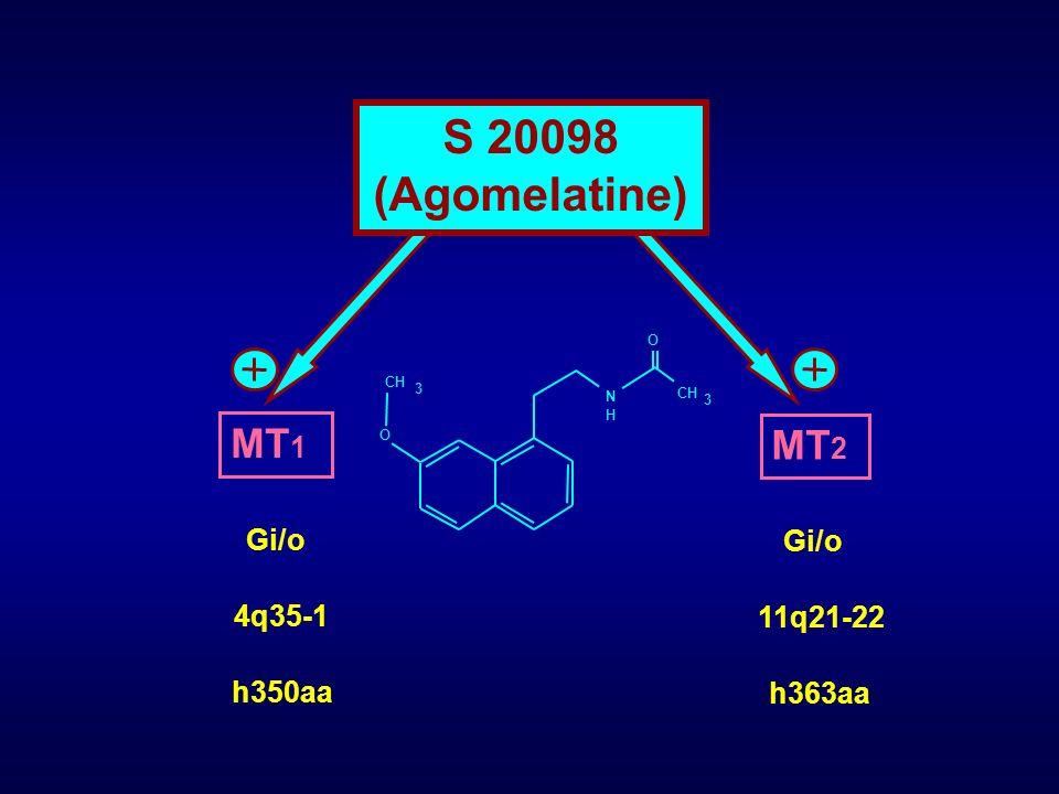 MT 2 Gi/o 11q21-22 h363aa MT 1 Gi/o 4q35-1 h350aa O O CH 3 N H 3 S 20098 (Agomelatine)