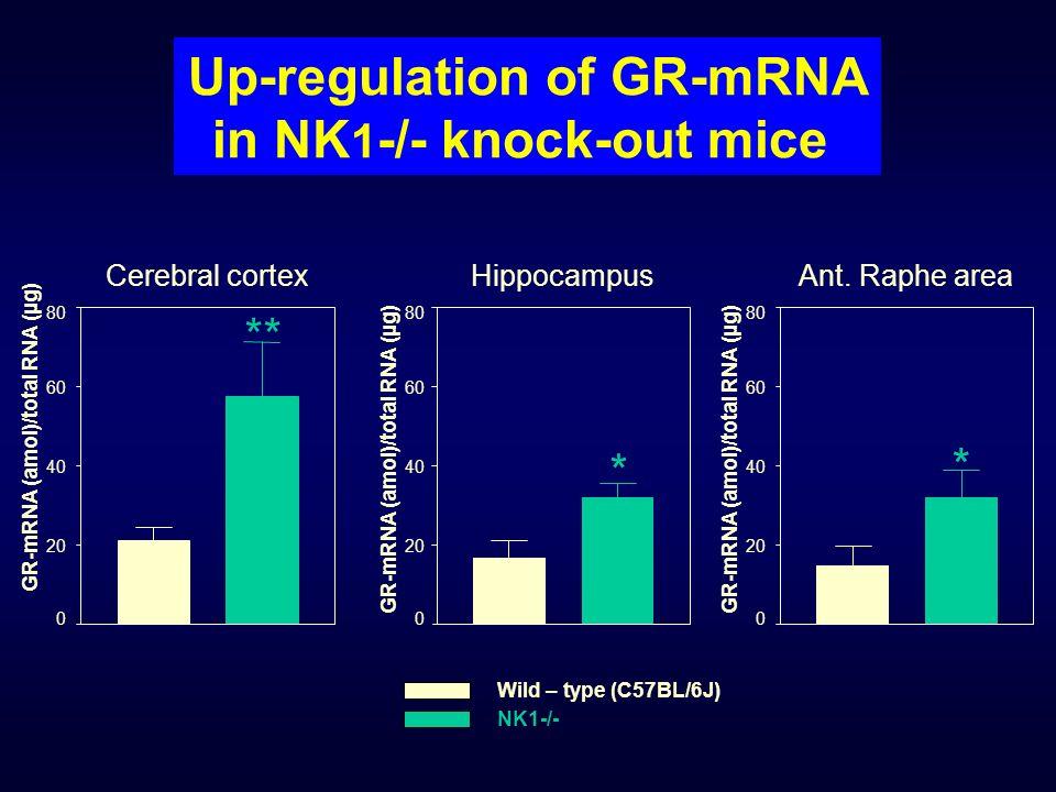 Up-regulation of GR-mRNA in NK 1 -/- knock-out mice 0 20 40 60 80 ** Cerebral cortex GR-mRNA (amol)/total RNA (µg) 0 20 40 60 80 * Hippocampus GR-mRNA