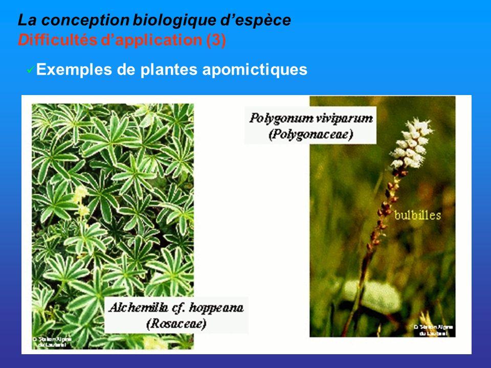 La conception biologique despèce Difficultés dapplication (3) Exemples de plantes apomictiques