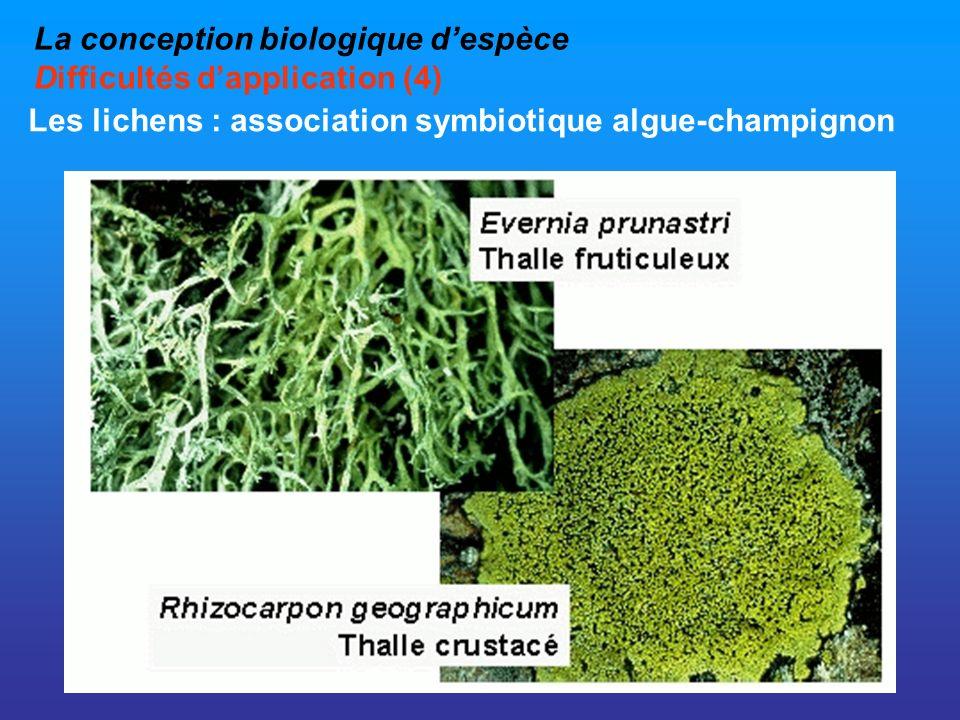 La conception biologique despèce Difficultés dapplication (4) Les lichens : association symbiotique algue-champignon