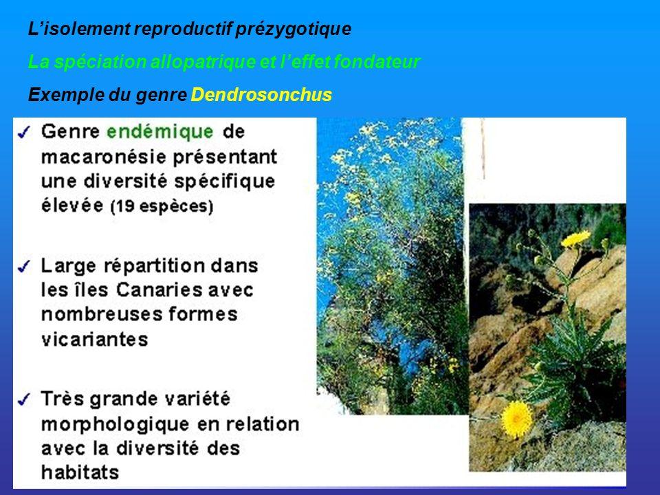 Lisolement reproductif prézygotique La spéciation allopatrique et leffet fondateur Exemple du genre Dendrosonchus