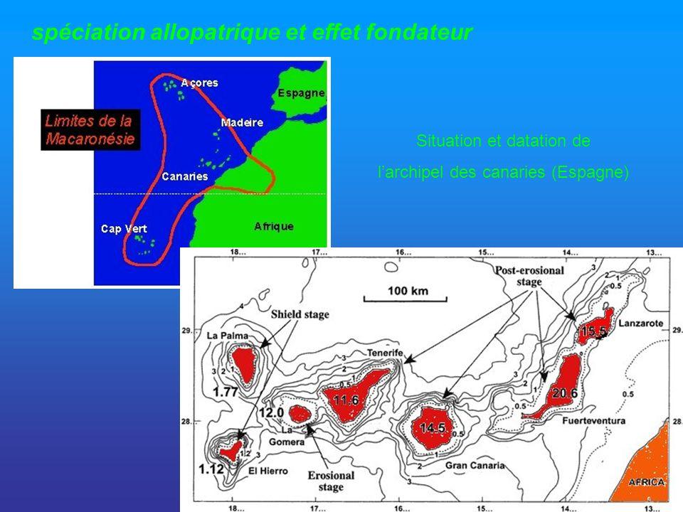 spéciation allopatrique et effet fondateur Situation et datation de larchipel des canaries (Espagne)