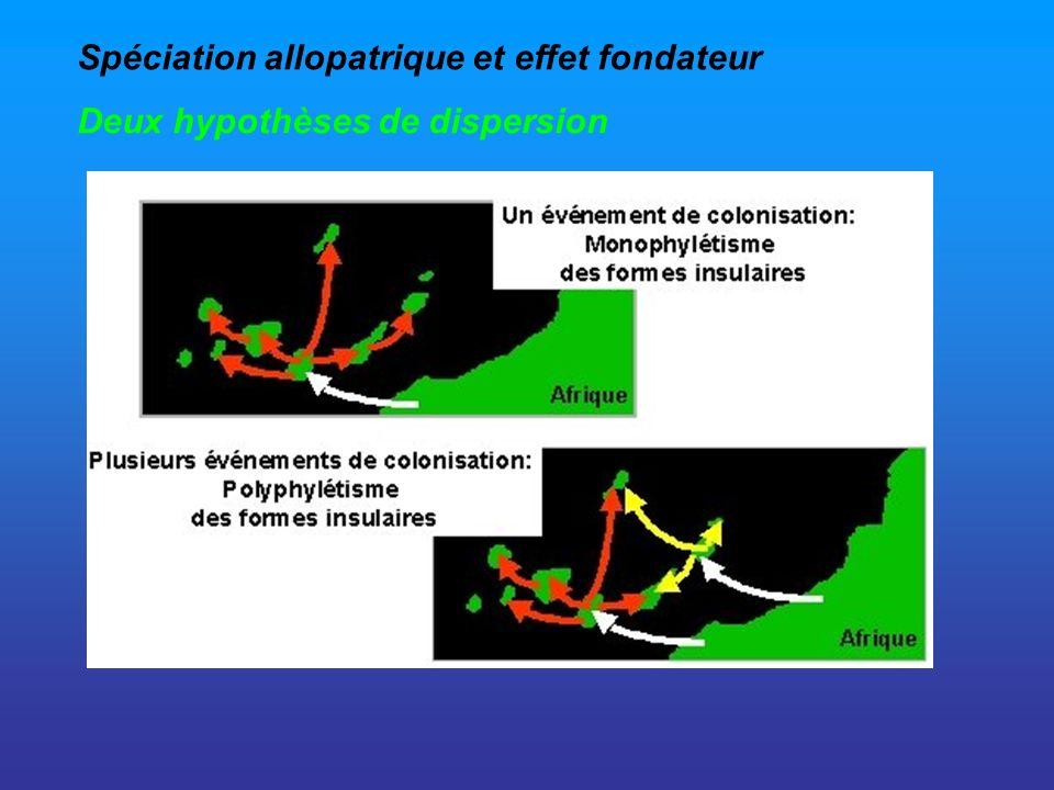 Spéciation allopatrique et effet fondateur Deux hypothèses de dispersion