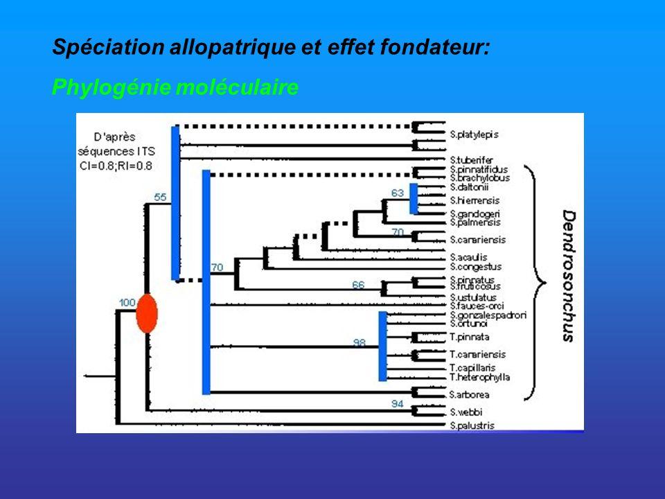 Spéciation allopatrique et effet fondateur: Phylogénie moléculaire