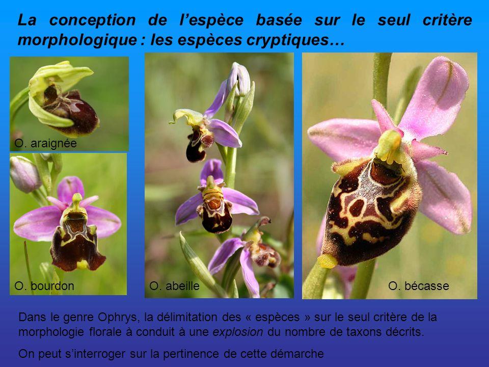 La conception de lespèce basée sur le seul critère morphologique : les espèces cryptiques… Dans le genre Ophrys, la délimitation des « espèces » sur l
