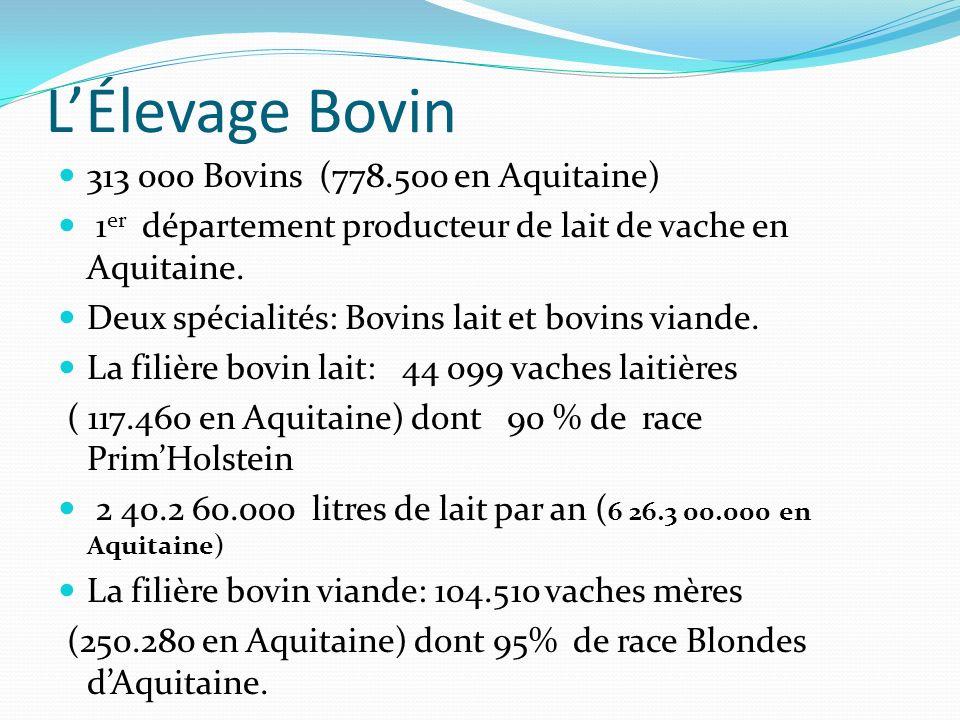 LÉlevage Bovin 313 000 Bovins (778.500 en Aquitaine) 1 er département producteur de lait de vache en Aquitaine. Deux spécialités: Bovins lait et bovin