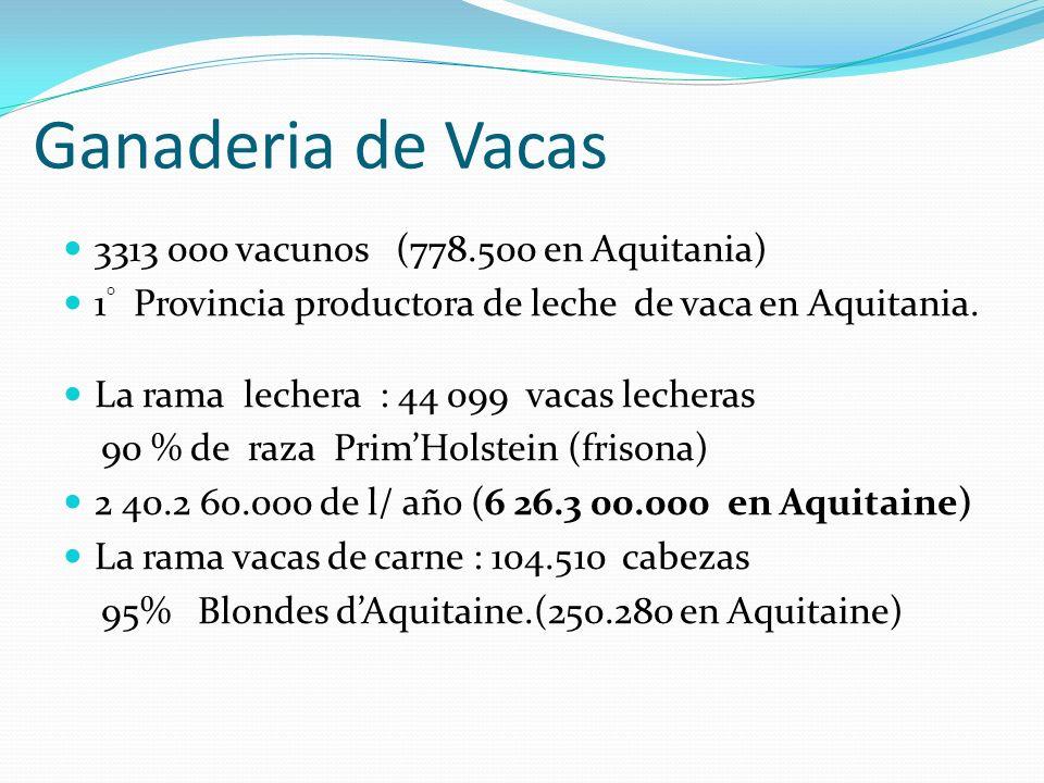 Ganaderia de Vacas 3313 000 vacunos (778.500 en Aquitania) 1 ° Provincia productora de leche de vaca en Aquitania. La rama lechera : 44 099 vacas lech